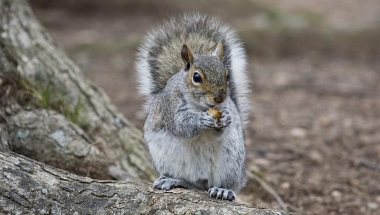 Io sto con gli scoiattoli: 20 mila cittadini aderiscono alla nostra petizione