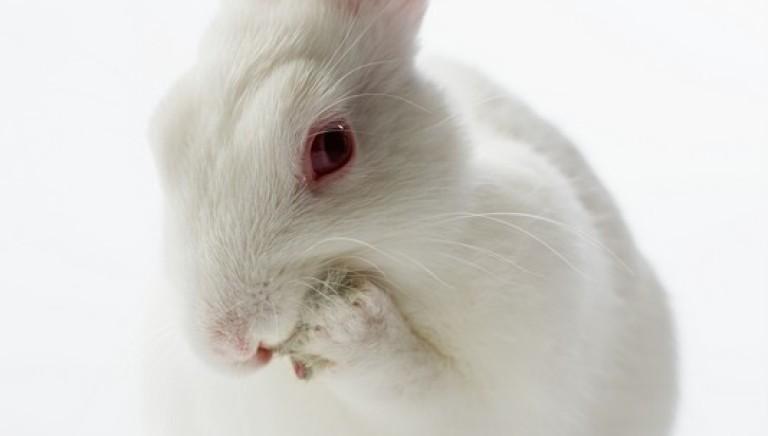 Svolta animalista anche in Brasile: stop ai test cosmetici  su animali
