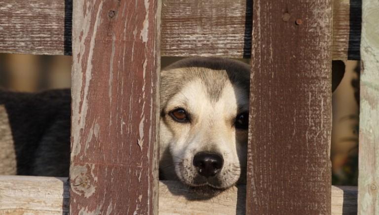 Sofferenze dei cani in Romania, intervenga la Commissione UE!