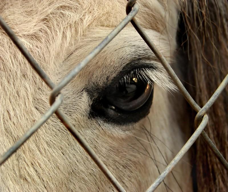 Occhi di mucca