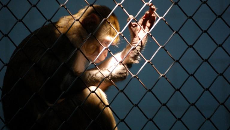 Articolo 13 e vivisezione: a che punto siamo?