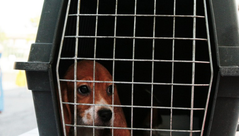 Renzi e Lorenzin, rispettate la legge restringi-vivisezione!