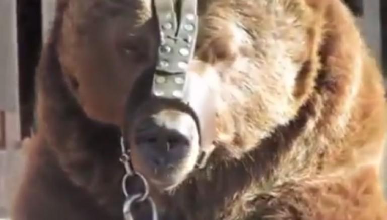 Animali sotto sequestro al Circo Martin!