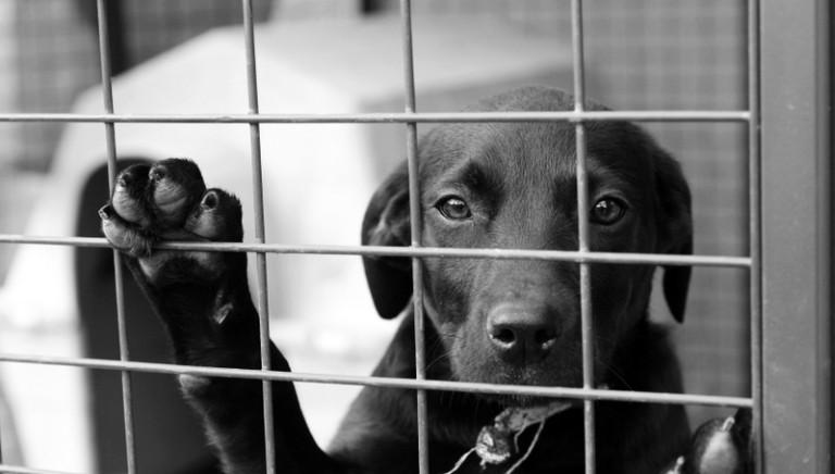 Toscana, misure minime box cani: difendiamo Regolamento in vigore