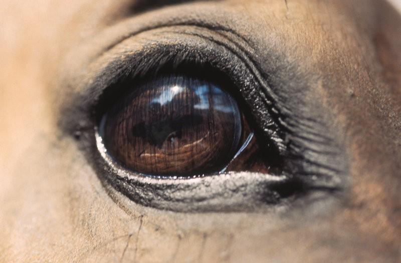 Due condanne per corse clandestine di cavalli