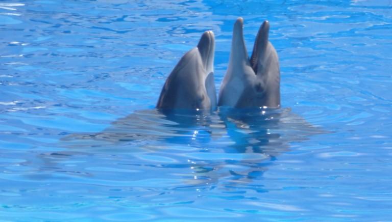 Un'Europa libera dai delfinari!