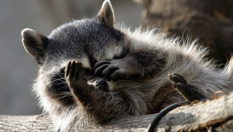 Sicilia, proposta di legge contro le pellicce