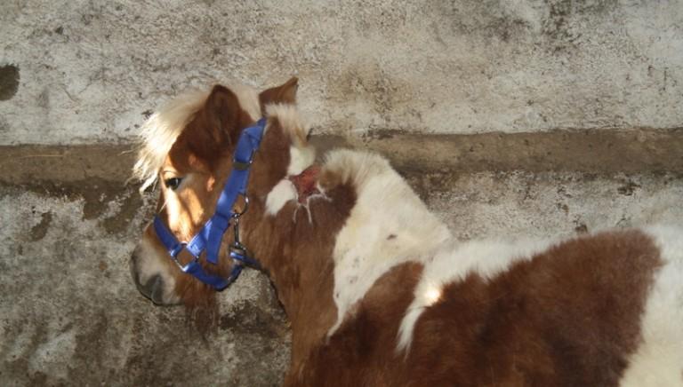 Animali maltrattati, shock vicino Napoli
