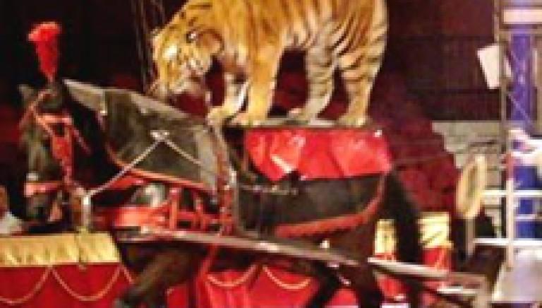 Circo Martin, il sequestro degli animali è fondamentale!