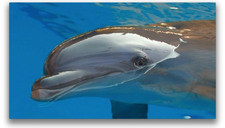 Il delfino parlante che fa impazzire il web