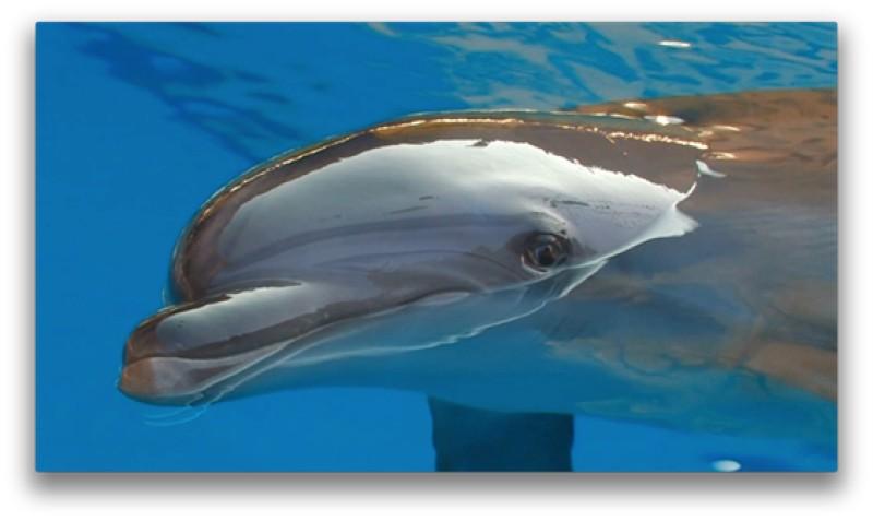 delfino parlante