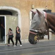 Cavallo delle botticelle
