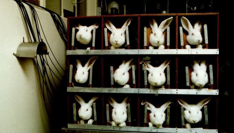 """Oggi Giornata Mondiale ONU degli Animali """"da laboratorio"""""""