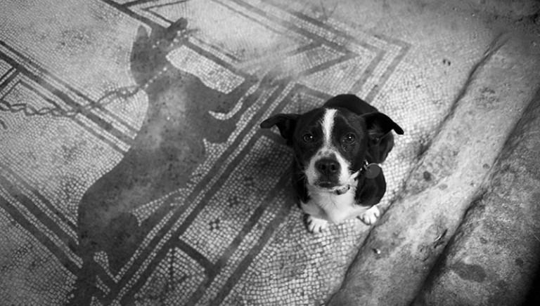 Cani Pompei, Associazioni: no all'accalappiamento