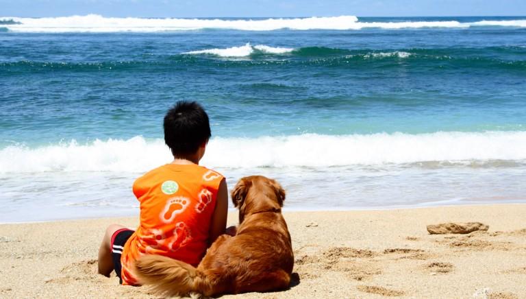 Quattro zampe sotto l'ombrellone? Aumentano le spiagge a misura di cane!