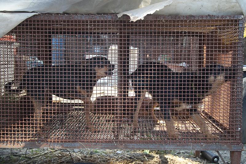 Maltrattamento di animali, 10 anni di Legge: esperti al convegno LAV