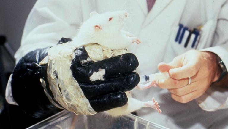 Botox, con Associazioni animaliste di tutta Europa contro i test su animali