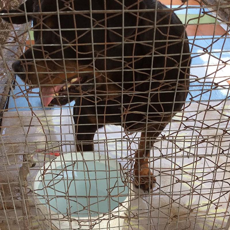 Emergenza adozioni al canile Parrelli: adotta un cane o un gatto, scrivici ad adozioni@lav.it