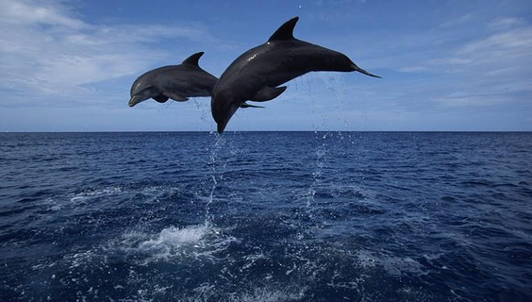 #LAVeraLibertà dei delfini ai campionati allievi di atletica leggera