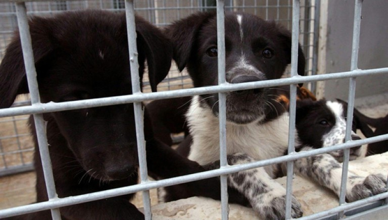 Uccisero 9 cani, Veterinari condannati in via definitiva. Associazioni chiedono la radiazione