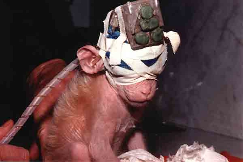 Attacco alla ricerca del futuro, la lobby vivisettoria mostra il lato anacronistico e ottuso della sperimentazione animale
