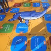 Pescara - Il gioco del delfino