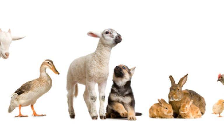 Bocconi avvelenati e benessere animali: Commissione Senato propone stralcio a Ddl Governo