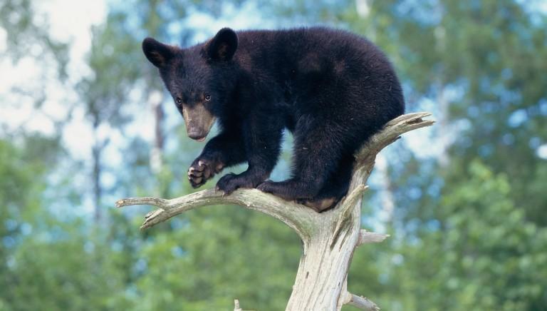 #Daniza: caso esemplare di incompetenza amministrativa in gestione fauna selvatica