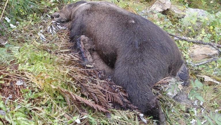 #Daniza uccisa: nessuna fatalità, responsabili paghino