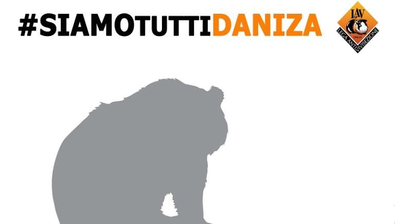 #Daniza: Min. Galletti riferisca a Camere con inchiesta indipendente. Urgente sequestro orsi Trentino e gestione a NIRDA - CFS