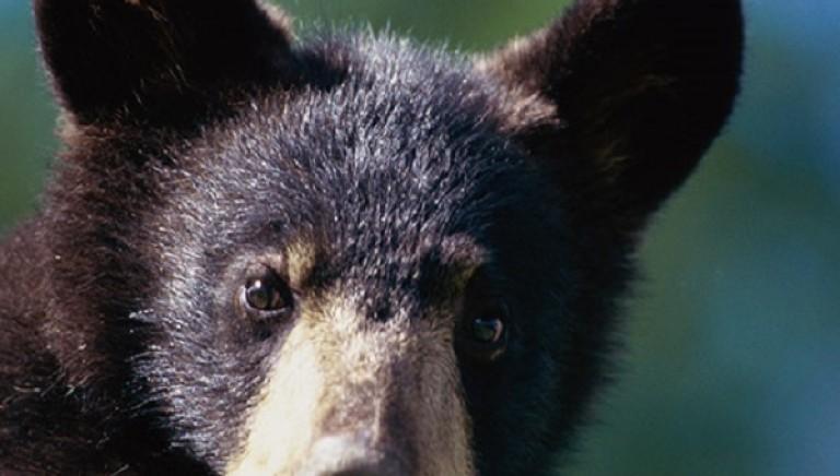 #DANIZA: Commissione UE fermi finanziamenti. Ministro Ambiente garantisca sopravvivenza cuccioli.