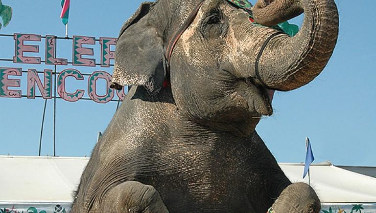 Circo Martin: sequestrati per maltrattamento tutti gli animali. Prima volta in Italia