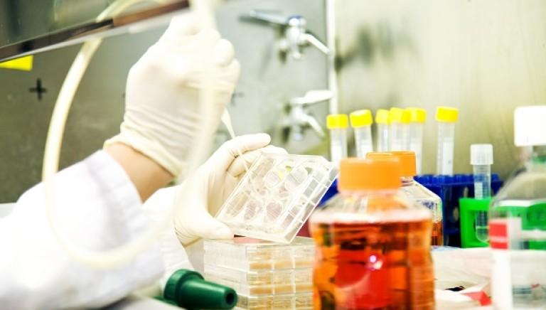 Metodi Alternativi: primi passi in Italia per i test in vitro senza animali, grazie a UNIGE