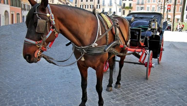Botticelle, cavallo stramazza al suolo in Piazza Montecitorio: abolire servizio a trazione ippica