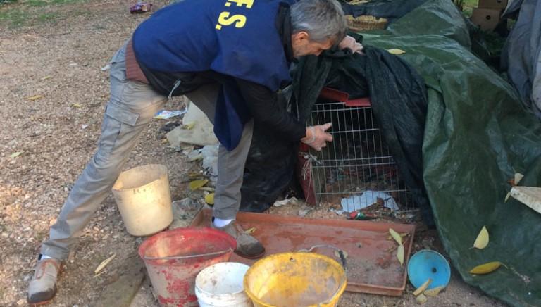 Verona: dopo nostra denuncia sequestrati animali di un allevamento abusivo. Ora affidati a noi