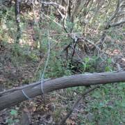 Campo CABS 2014 Trappola sul ramo