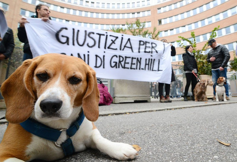 I beagle di Green Hill davanti al tribunale