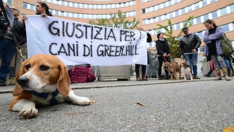 Processo Green Hill: udienza rinviata al 12 gennaio 2015