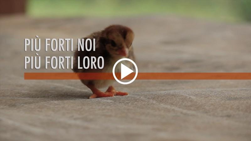Video Più Forti Noi, Più Forti Loro