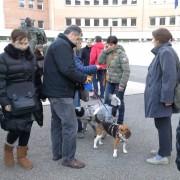 Beagle presenti all'udienza del Processo Green Hill