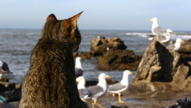 """La colonia di felini marini di """"Amici di Su Pallosu"""" nel mirino dell'amministrazione locale"""