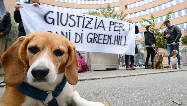 Green Hill: indagato il veterinario dell'ASL. LAV: atto dovuto, che va esteso a tutti coloro che favorivano l'azienda