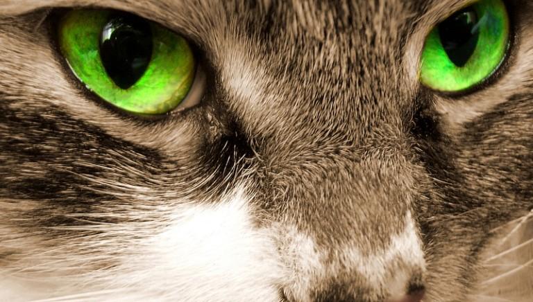 Perugia choc: seviziava gatti come in un film horror, denunciato ventunenne