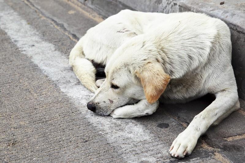 Un cane di strada