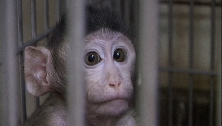 28 febbraio giornata di iniziative per le scimmie del Centro di Ricerche Enea/CNR Casaccia