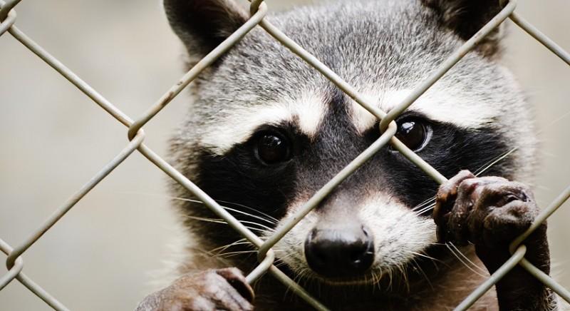 Moda, sondaggio ISPO per LAV: il futuro è Animal Free