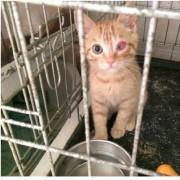 Gattino in gabbia con lesione ad un occhio