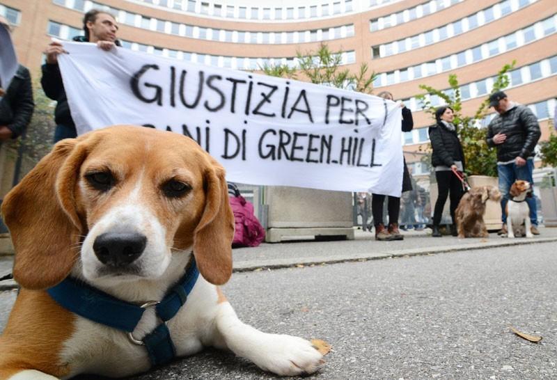 Un beagle di Green Hill davanti al Tribunale di Brescia