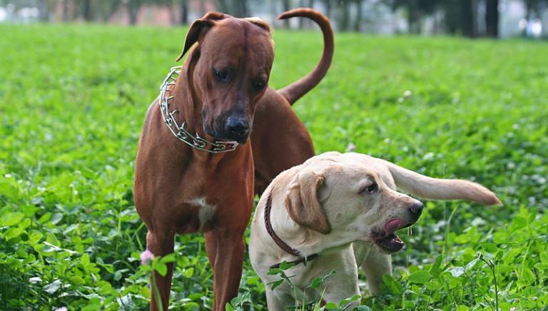 Associazioni unite contro proposte peggiorative del Regolamento Tutela Diritti Animali di Roma