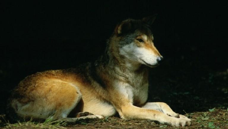 Animalicidi seriali nel Parco del Cilento: il macabro simbolismo zoomafioso